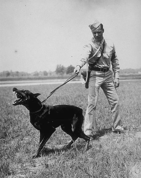 seguro_responsabilidad_civil_perros